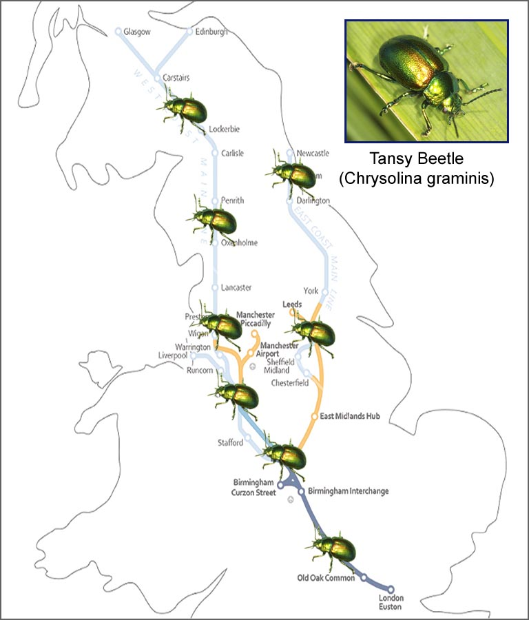 Future of HS2 in doubt as endangered beetle found on all proposed routes