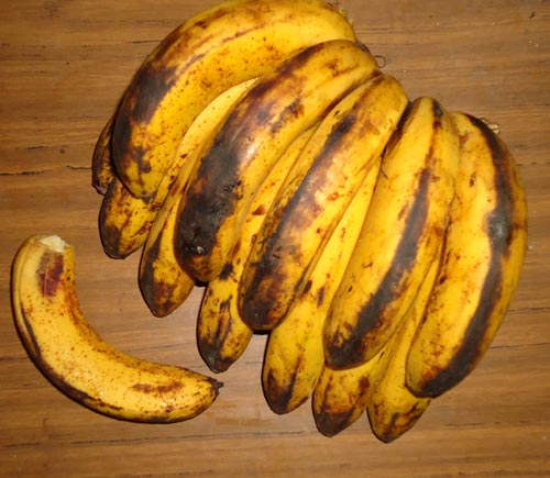 Suffolk man '100% self-sufficient' with energy from old bananas