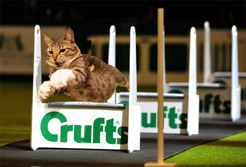 Uproar as cats are admitted to Crufts 2019