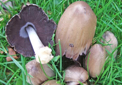 Lecturer jailed for picking mushrooms in Regent's Park