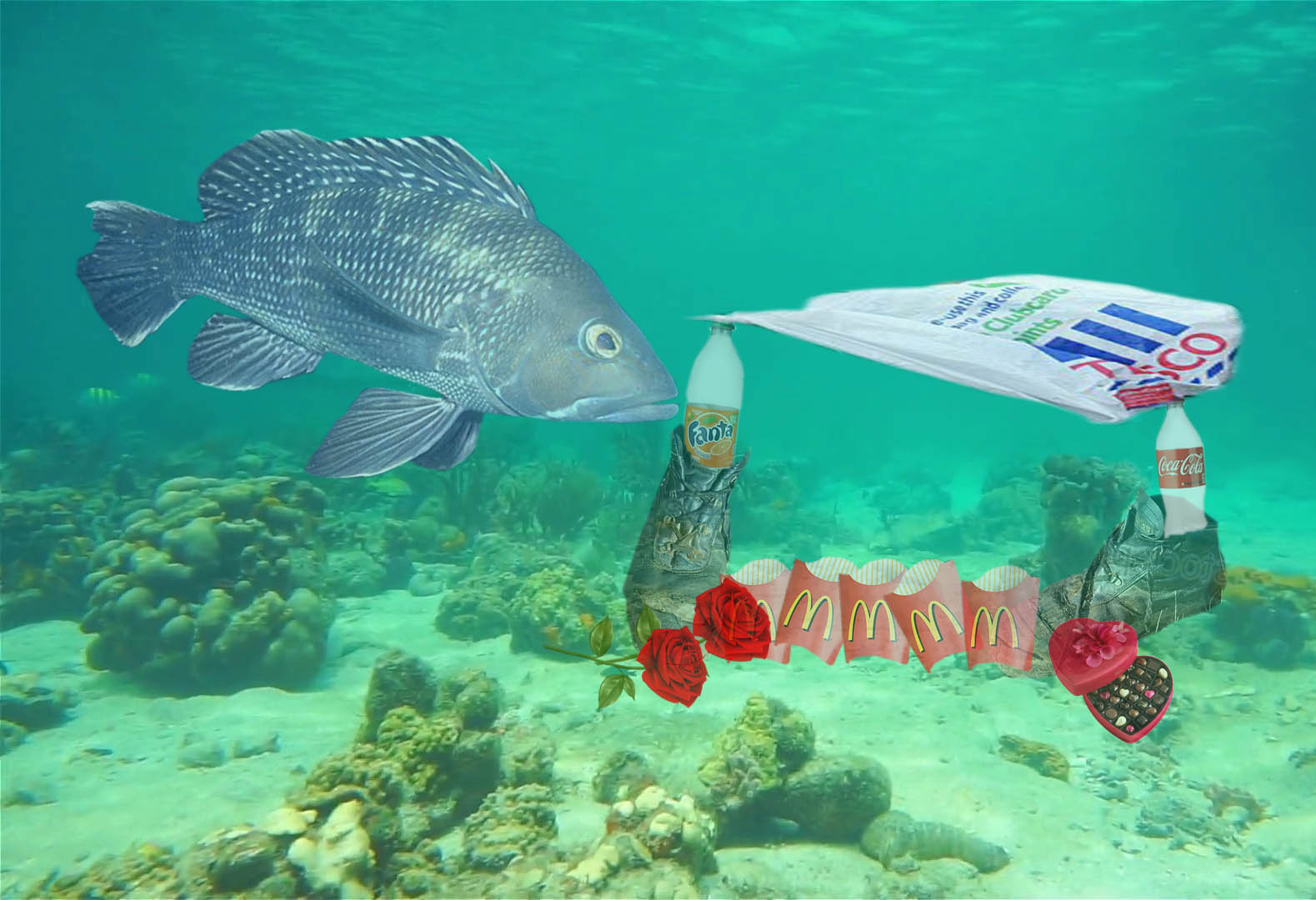 Fish filmed building 'homes' for mates from plastic waste