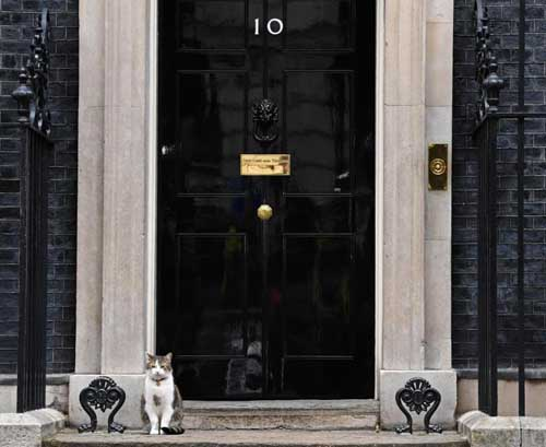 Downing Street cat leaves after mouse 'backflap' deal collapses