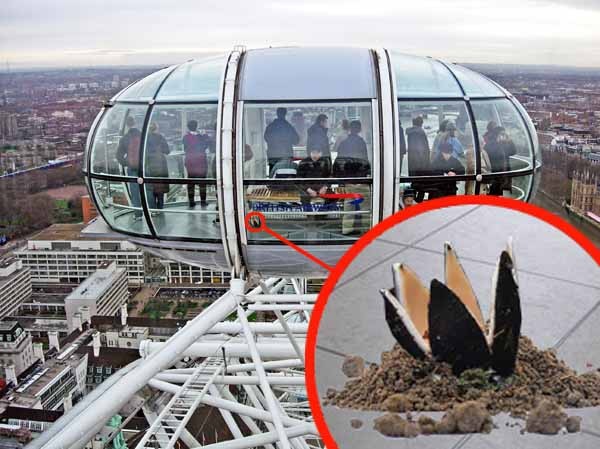 London Eye closed after rare Japanese fungi found growing under seat