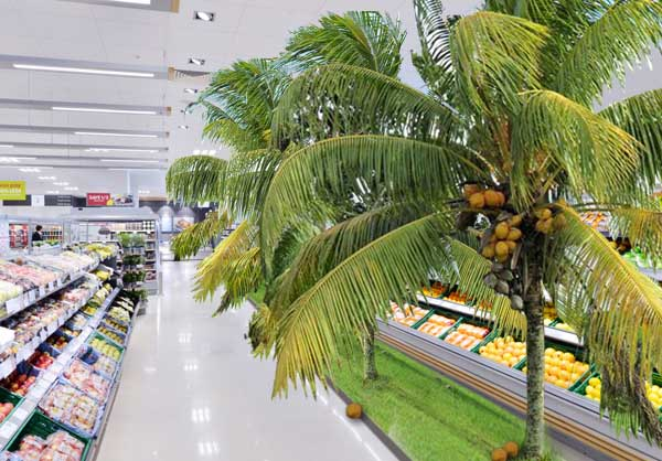 Supermarket to let shoppers pick their own coconuts
