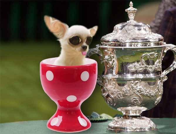 96 gram German dog scoops Crufts 'Micro Breed' trophy