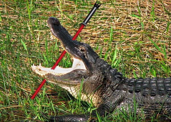 Australian toddler attacks crocodile with light sabre to save mother