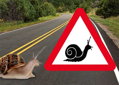 Snails get a safer trail across busiest roads