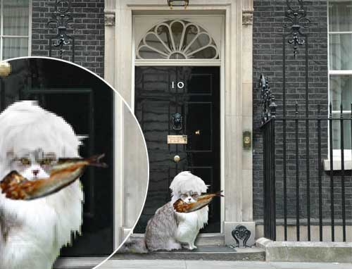 Larry sacked as new cat takes over at No.10