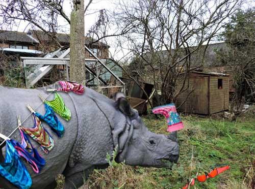 Villager wins planning battle to keep rescued rhinoceros in back garden