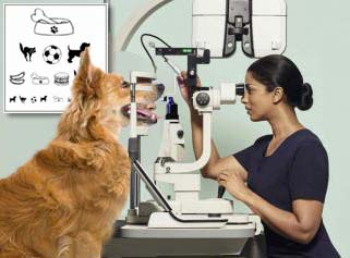 Specsavers launches OCT tests for dogs