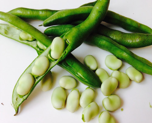 Green party promises free High Speed Broadbeans for every home