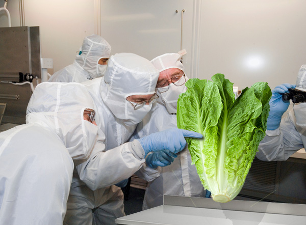 Lettuces grown in space still weightless when brought back to Earth