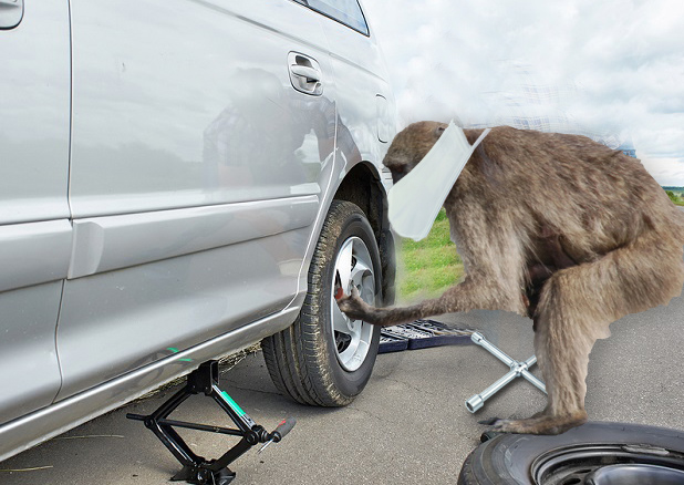 Safari park baboons caught stripping car of its wheels
